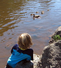 river & ducks & P2