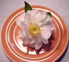 Camellia-on-plate