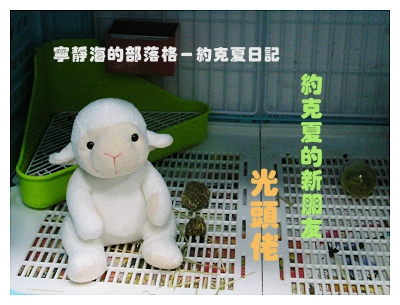 約克夏日記_20060115_光頭佬登場