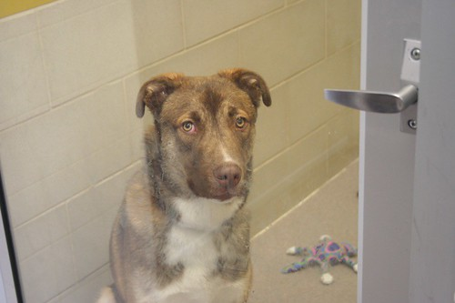 Old, mellow dog wanting to go to a home