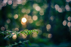 Bokeh photo by GnondPomme