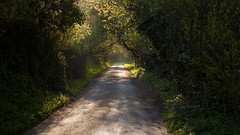 Road in Normandy photo by Johannes Valkama