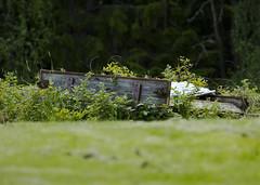 Overgrown   (Explore) photo by Vidar Ringstad, Norway