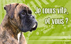 Panneau Attention Chien 01