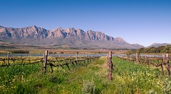 ceres mountain range&vineyards1 photo by WITHIN the FRAME Photography(2.5 Million views tha