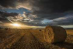 Harvest photo by Michael Carver Photography