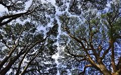 uno sguardo al cielo ... a look to the sky ... photo by miriam ulivi