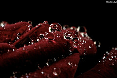 Water Drops photo by Caitlinm123