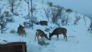 Deer are jerks