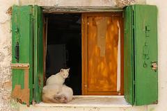 gatti veneziani photo by alessandro 1948