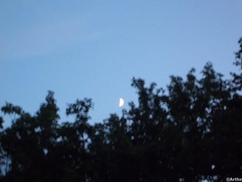Montée de Lune au dessus des arbres