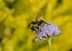 Busy bee photo by Fletty Flicks