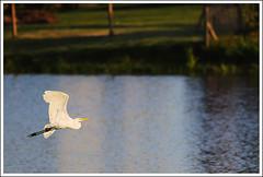 Take-off - Despegue photo by Carlos J M Martinez_1