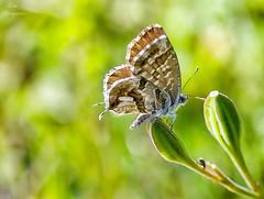 Pequeña  mariposa... photo by Leo ☮
