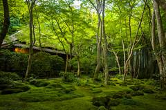 moss garden (Giou-ji temple, Kyoto) photo by Marser