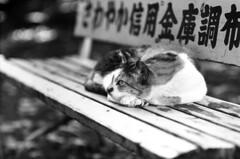 チラ photo by N-J9man