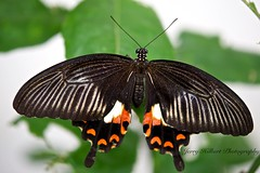 Butterfly photo by Jerry__