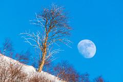Blue moon photo by Richard Larssen