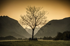 Lone tree photo by Andrej Trnkoczy