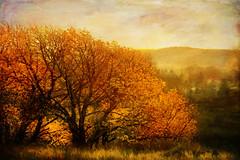 A woodland in full color . photo by BirgittaSjostedt