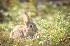 vintage bunny photo by /Paola/