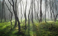 Bolehill Mist 2 photo by J C Mills Photography