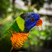 Colourful Act of God : Parrot