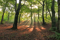 Woodland Rays photo by togwood