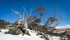 Spring Snow, Charlottes Pass
