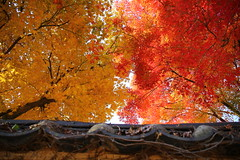 the Autumn Colors photo by HDH.Lucas