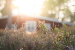 Between summer and fall photo by - David Olsson -