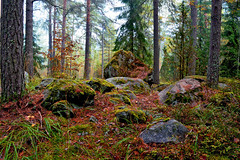 A foggy day in the autumn forest... photo by L.Lahtinen