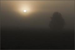 Sunrise through the fog (Explore #112  17/10/2014) photo by HEFFO1
