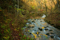 A Path Upstream photo by G Michael Lewis