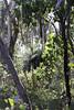 Grass Tree Walk 20140930 038