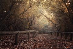 Fall Time photo by Zu Sanchez
