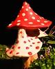 colourful fungi