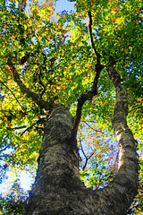 Irving Nature Park October 6 2014_9014 4x6 photo by DaveyMacG