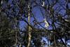 Grass Tree Walk 20140930 045