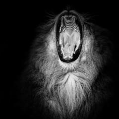 The Lions Roar photo by Tommy Høyland