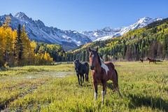 Autumn Horses In The Valley photo by glness