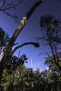 Grass Tree Walk 20140930 011