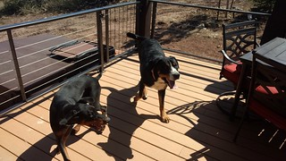 I am the dog watcher. Lukas and Max.