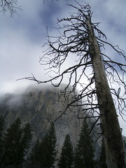 Burnt Tree and El Capitain