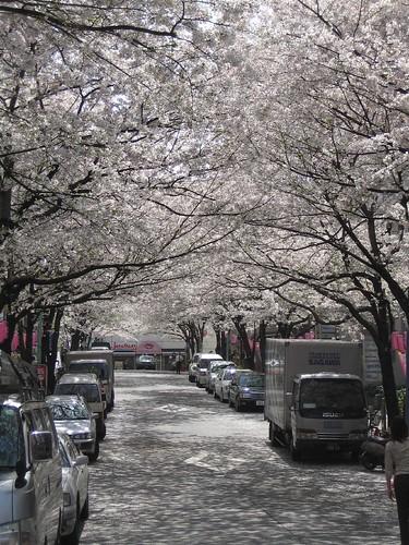 桜丘011