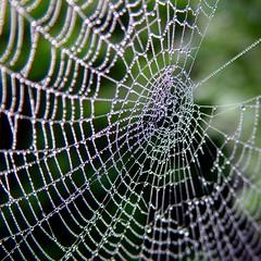 wide web photo by josef.stuefer