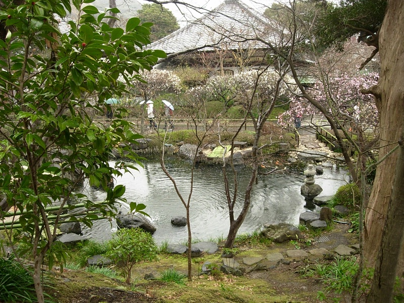 Hasedera's pond and plum trees