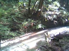stream 1 Butano State Park.jpg