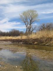 san pedro river - 1