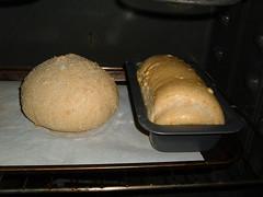 Cornbread Duo - Halfway done
